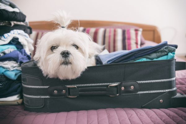 Traveling with Your Pet on Assignment